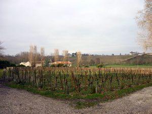 ポムロールのブドウ畑