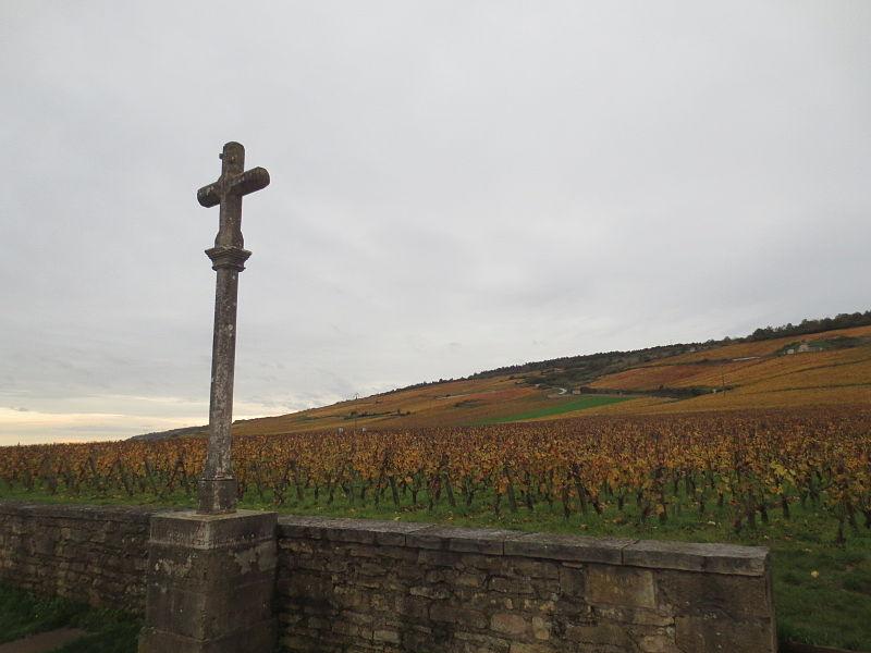 有名なロマネ・コンティの畑