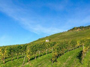vineyard-727988_1280