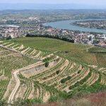 ローヌワインの主要銘柄と生産地図