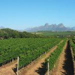 南アフリカワインの主要生産地