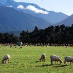 ニュージーランドワインの主要生産地