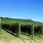 イタリア全20州のワイン産地の概要(地図)