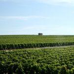ボルドーワインの主要生産地と地図