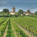 地球温暖化がブドウ栽培に影響?フランスワイン生産者の声
